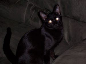 A black cat staring into the flash of the camera, sitting on a couch